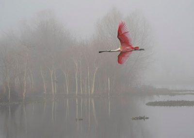 """""""Misty Morning"""" by Mark Mayfield"""