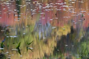Pastel Reflections On the Pond