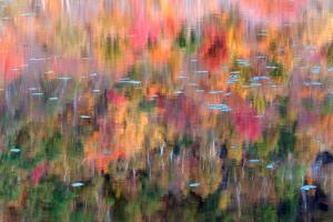 Multi Colored Reflections
