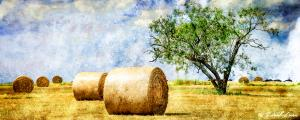 Small-File-Bales-filtered-on-969-1-of-1
