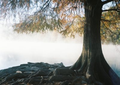 Cypress at Dawn- Maureen McKeon, Photography