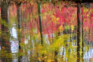 Reflections - Fall Trees in Pink. Limited Edition of 30.