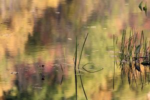 Grass in Fall Reflections